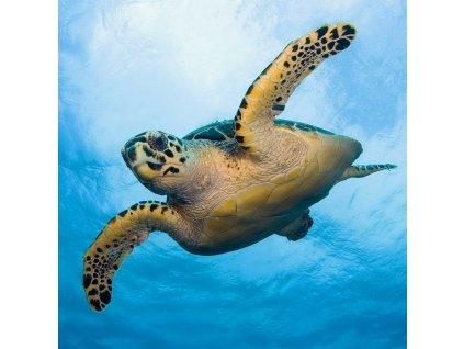 MCG51 SEA TURTLE