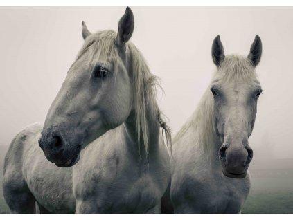 MPF24 WHITE HORSES