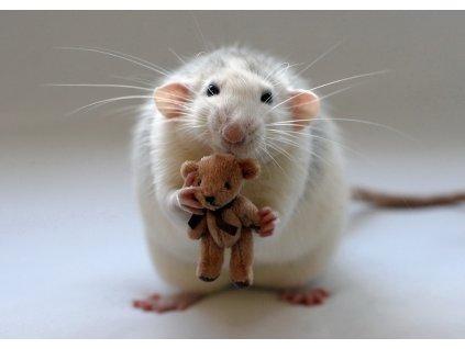 MPS07 RAT