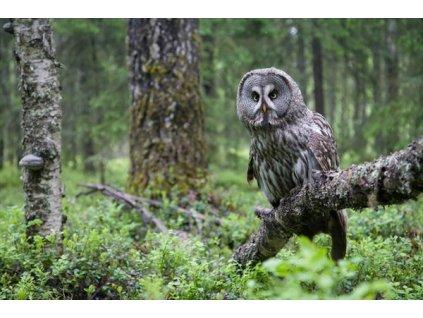 MCW11 OWL FINLANDw