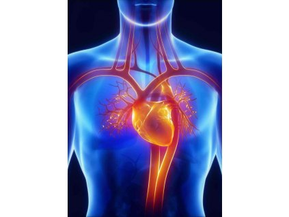 MCD05 HEART