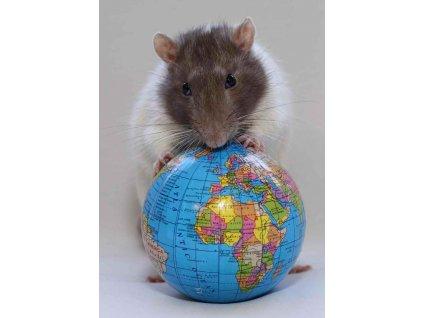 MPS25 EARTH RAT