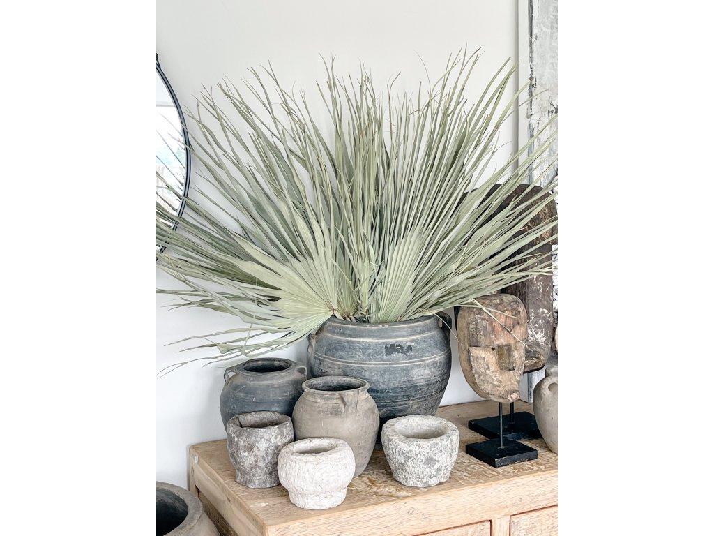 Palmové listy - svazek