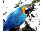 Ptactvo, exotické ptactvo