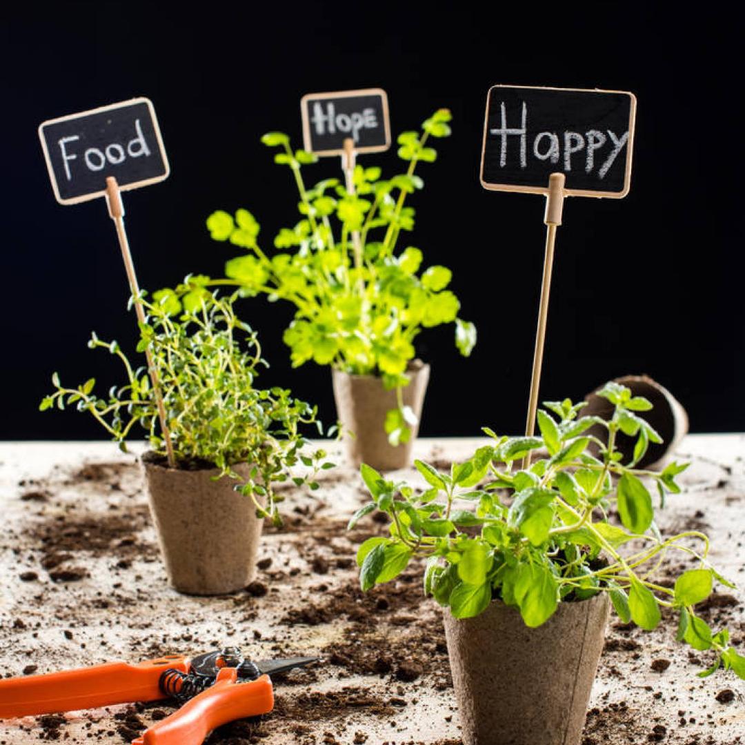 7 důvodů, proč pěstovat vlastní ekologickou zeleninovou zahradu