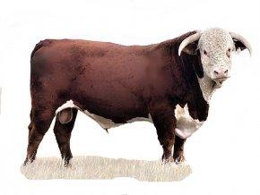 Hovězí maso s droby 1 kg