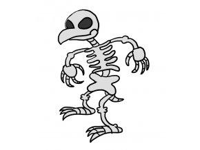Kuřecí skelet 1 ks