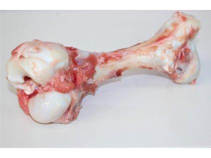 morková kost 4