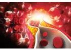 Cholesterol, srdce, cévy