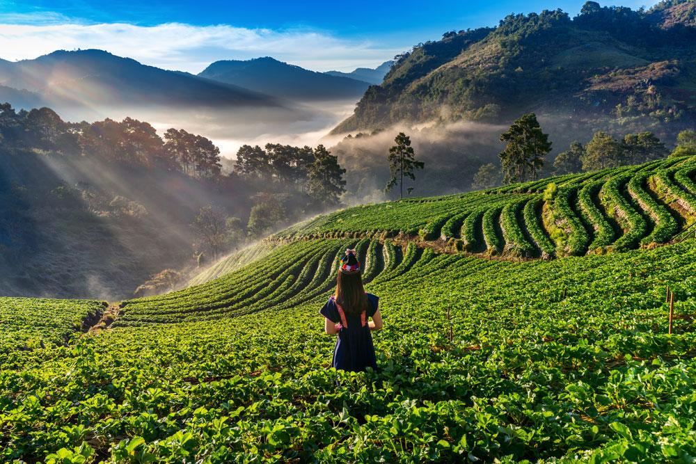 Prečo piť zelený čaj? Tieto benefity vás prekvapia.