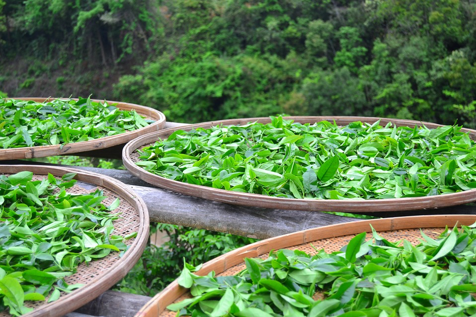 Matcha čaj a jeho antioxidačné vlastnosti