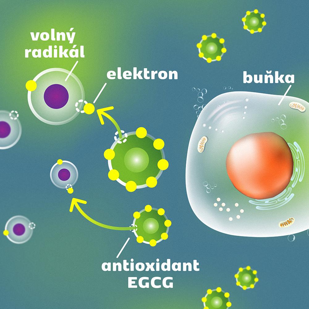 volne-radikaly-antioxidant