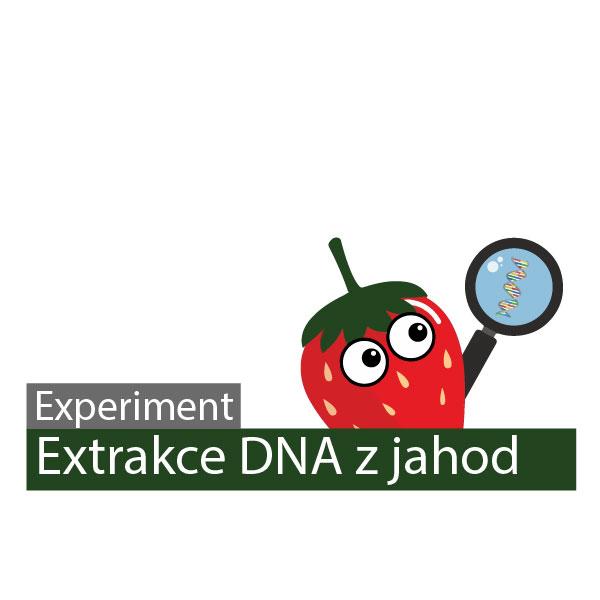 Extrakce DNA z jahod