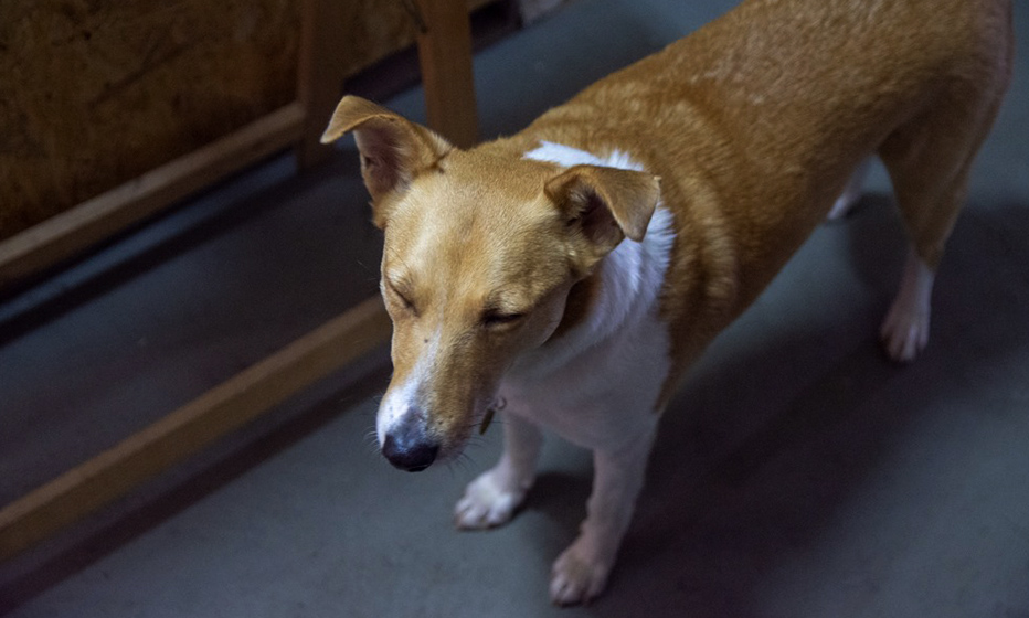 Valér-doggo