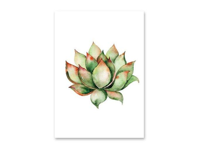 Obrazek Kaktus2