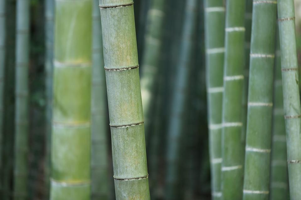Bambusové vlákno - materiál budoucnosti!