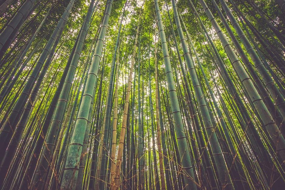 bambusova-kosilka