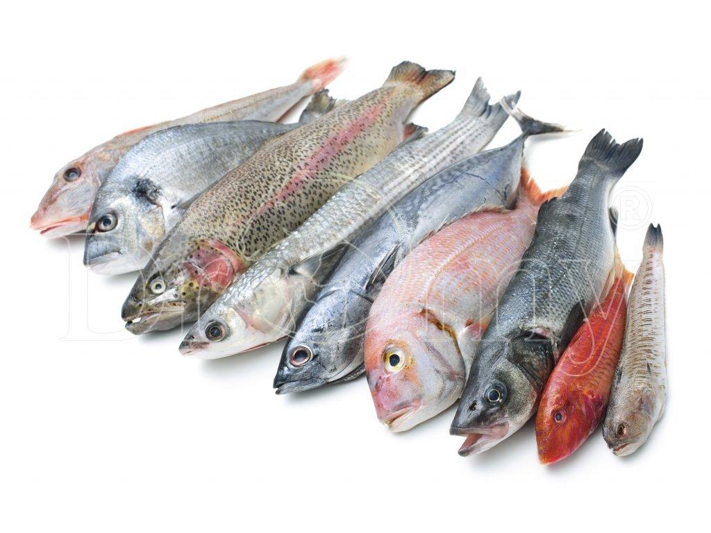 168 1 sea fish