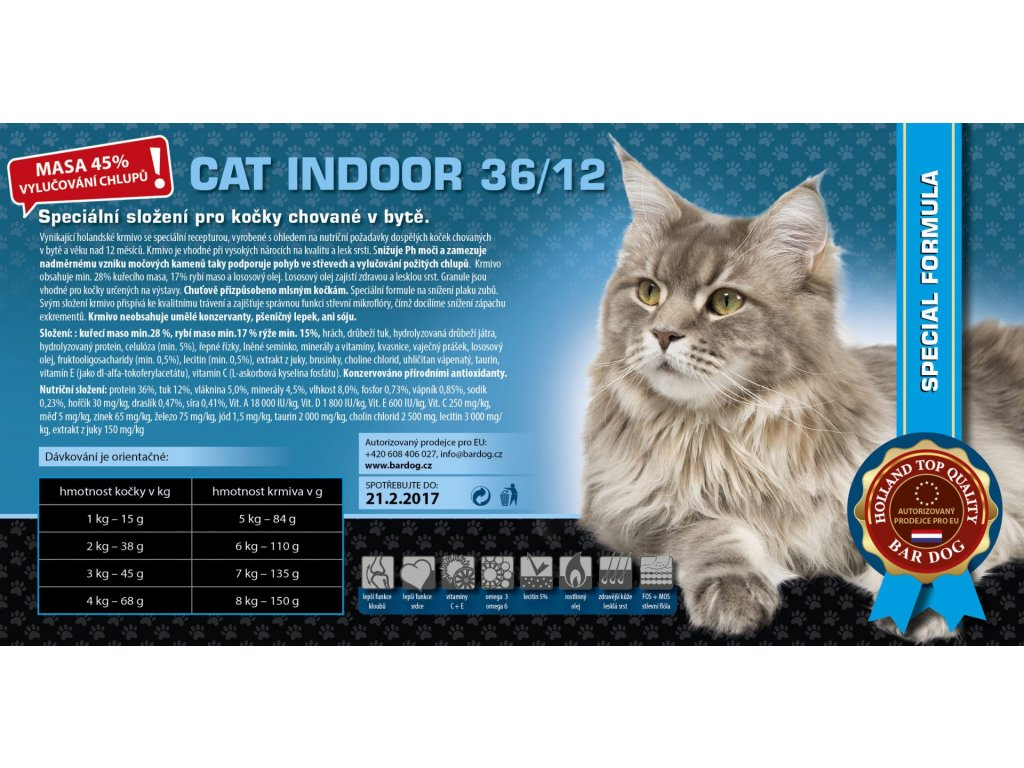 cat indoor
