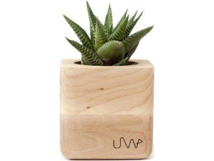 Květináč SUCUBE se sukulentem Haworthia limifolia - UrbanWood