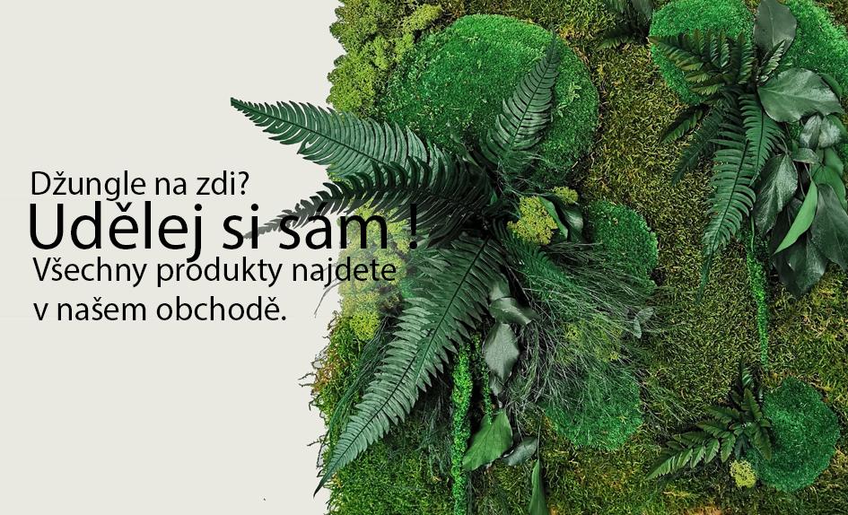 Stabilizované rostliny