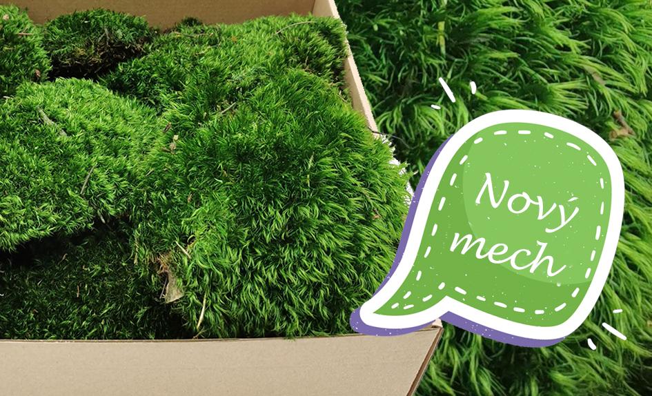 New Hairy Mood Moss