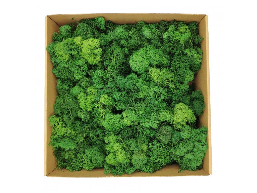 Leaf Green 1