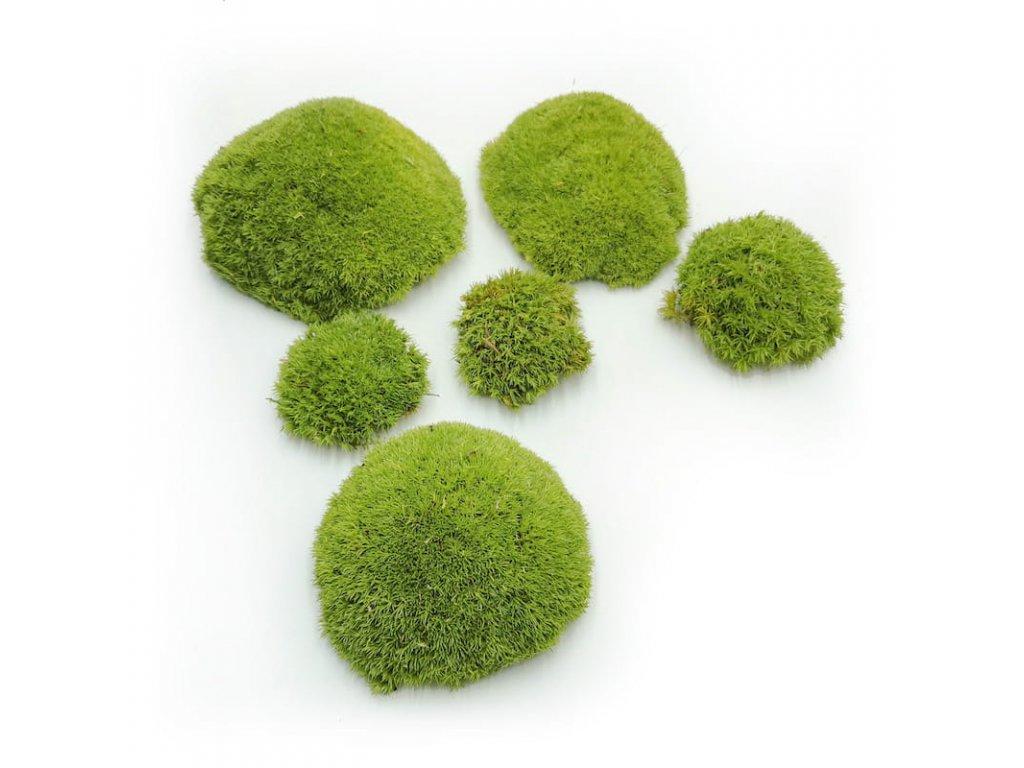 Light Green Ball Moss