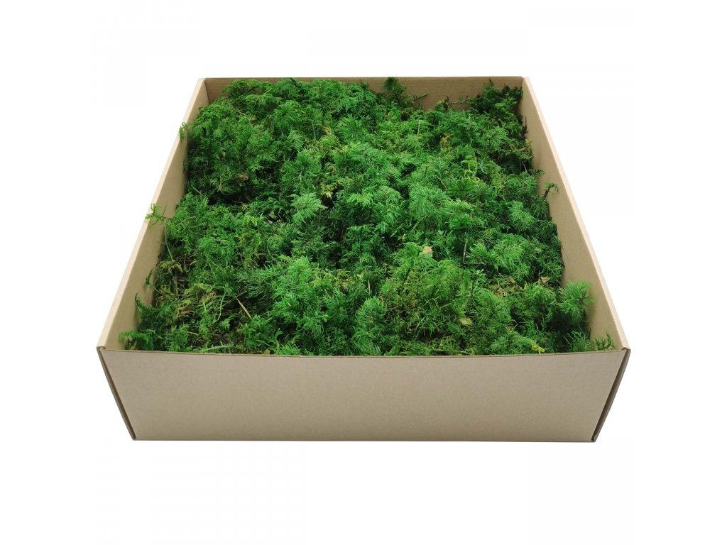 Mech Paprociowy Zielony 1