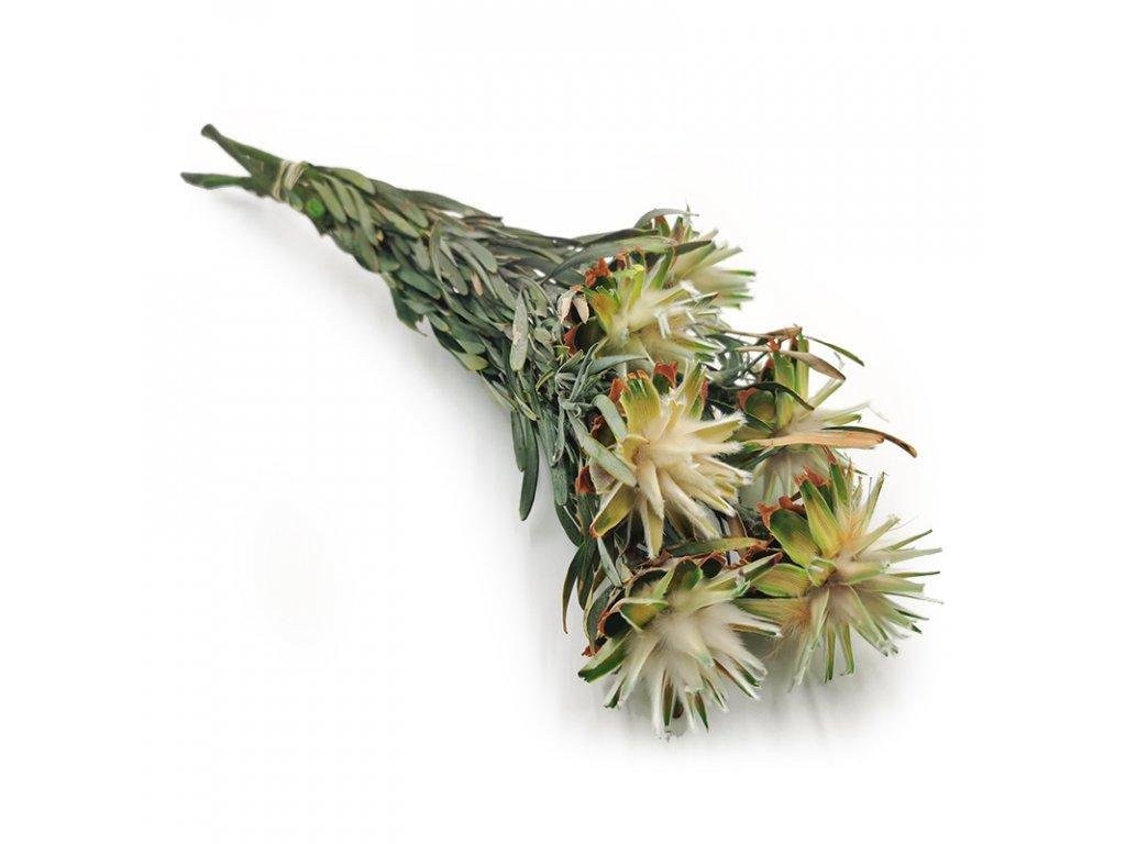 Kwiat stabilizowany Plumosum białe 2