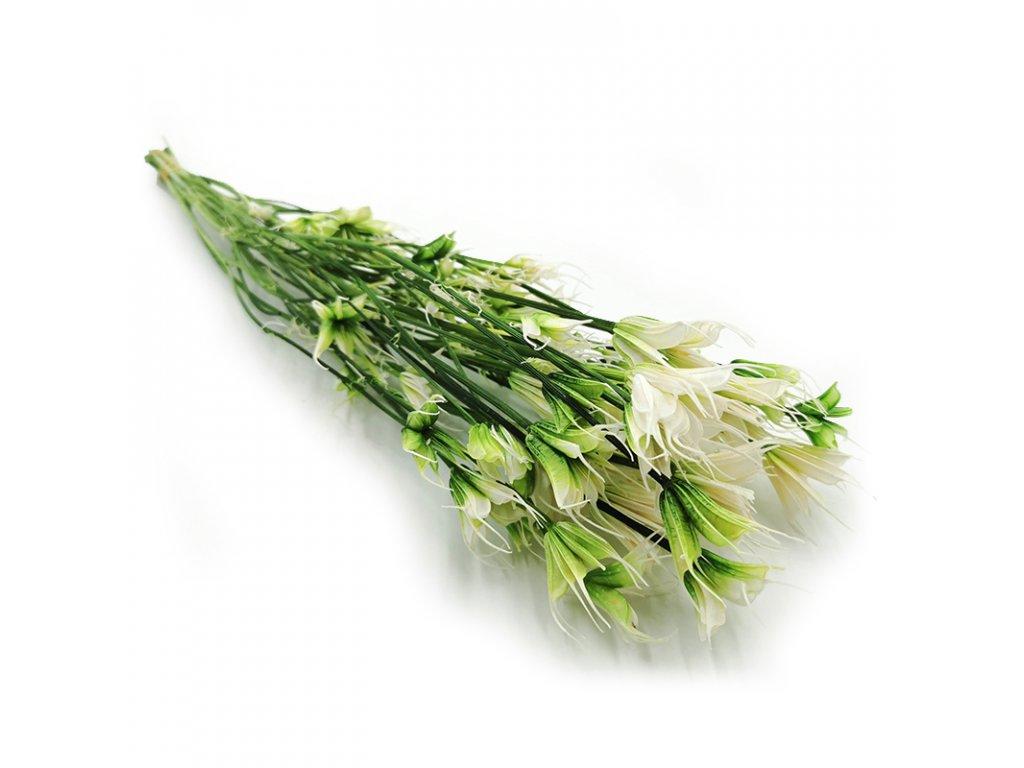 Kwiat Stabilizowany Czarnuszka Orientalna Nigella 2
