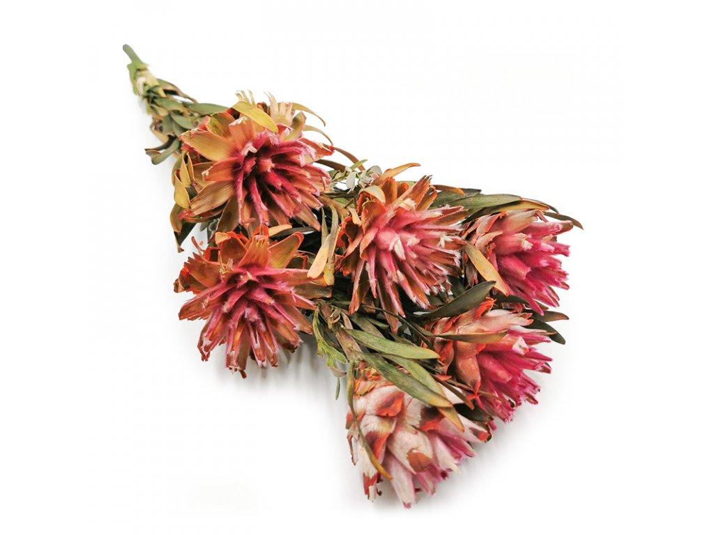 Kwiat Stabilizowany Plumosum Różowe bukiet