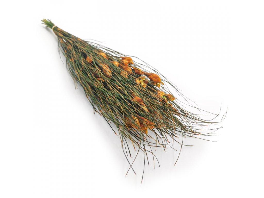 Ball Grass Kwiat Trawa stabilizowana 3