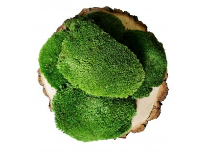 Medium Green Ball Moss
