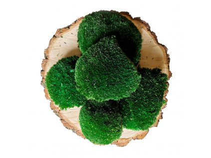 Dark Green Ball Moss wholesale
