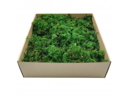 Fern Moss - Zelený - 200g