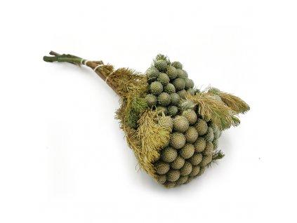 Brunia stabilizowana kwiat naturalny 2