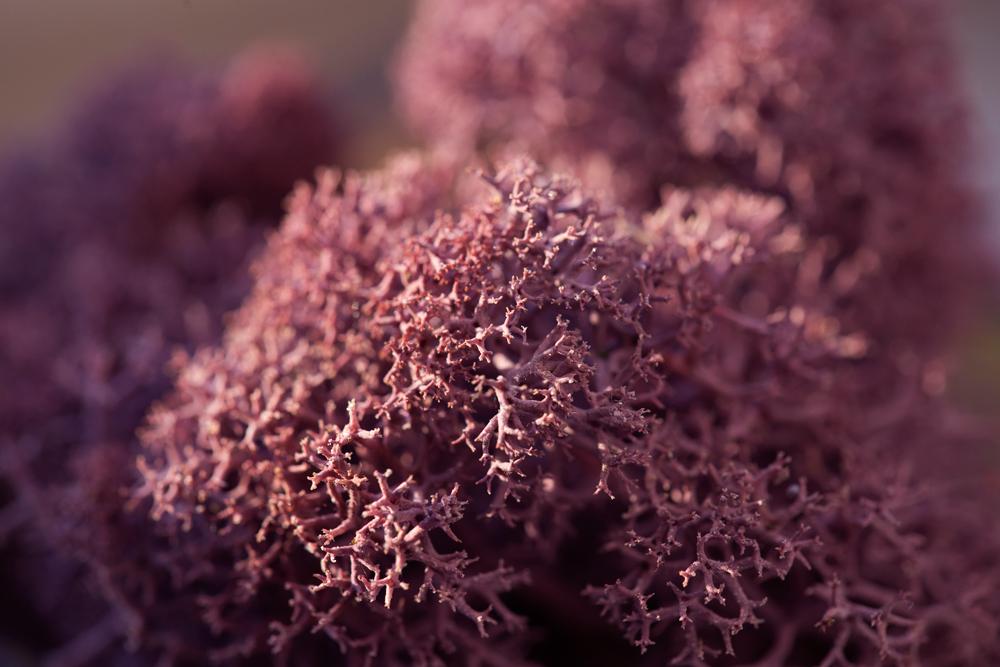 IMG_4314-fialový-web