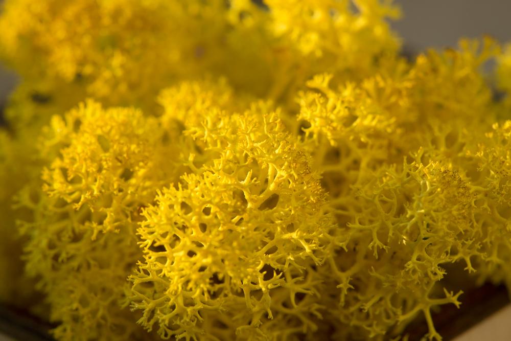 IMG_4320-žlutý-web