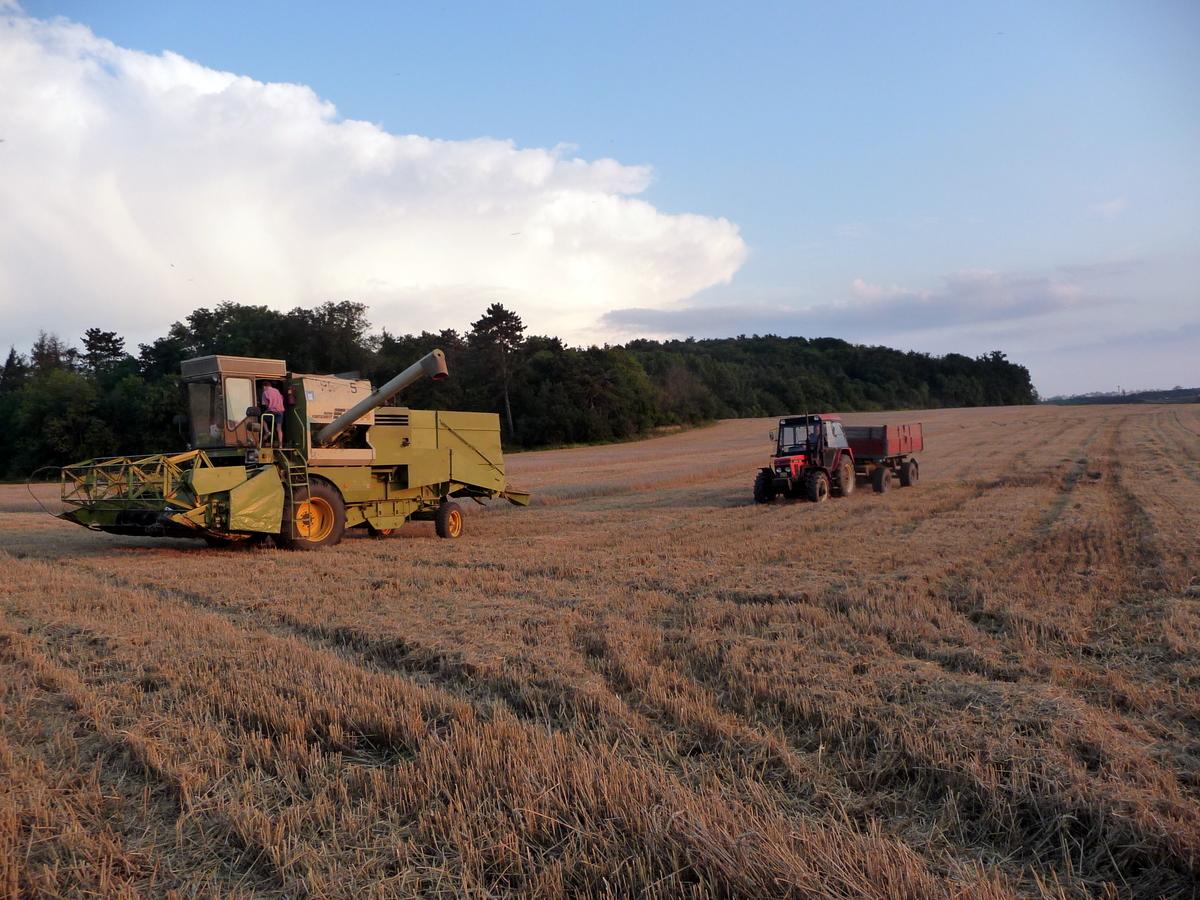 Zemědělská výroba