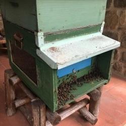 Ako sa včelári v Toskánsku (Taliansko)