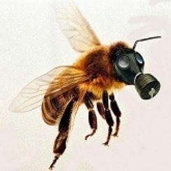 Včely zvíťazili! A my spolu s nimi! EÚ zakázala niektoré pesticídy!