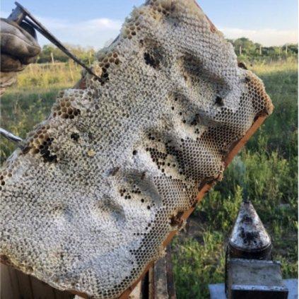 Medový plást v drevenom rámiku - Medáreň