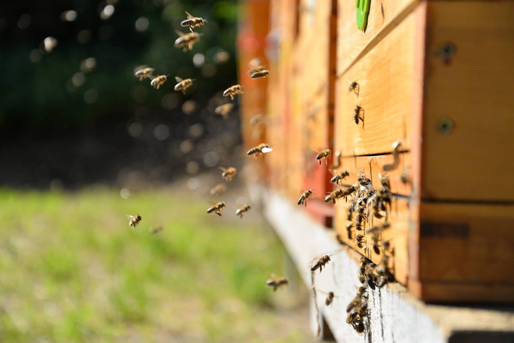 Kde včelaří Včelárium