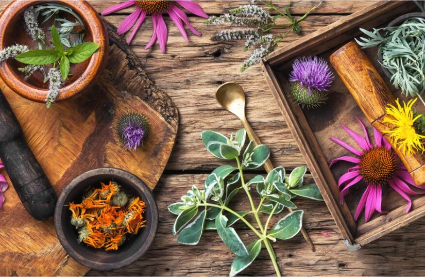 [Top 4] Léčivé bylinky proti bolestem pohybového aparátu