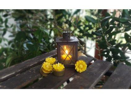 svíčka z včelího vosku čajová kopretina