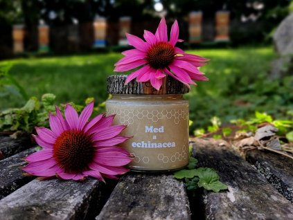 med a echinacea5
