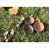 kokosova miska mala mefl 07