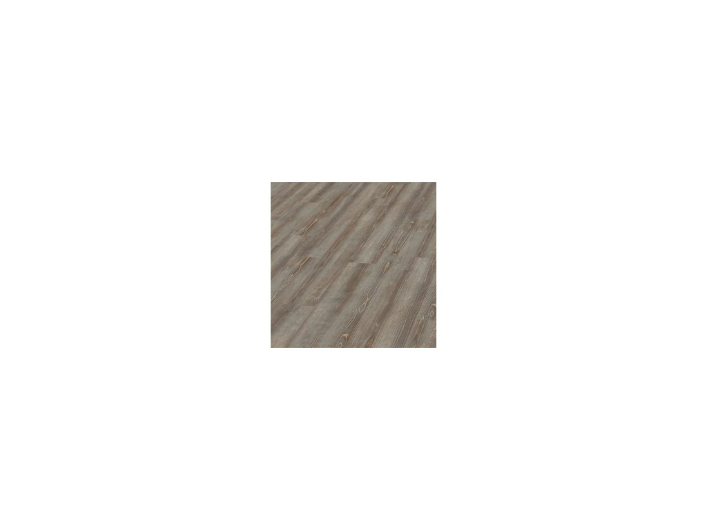 Grey Pine   5979