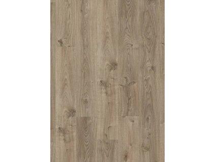 Venkovský dub šedohnědý